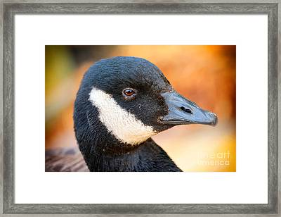 Golden Goose Framed Print