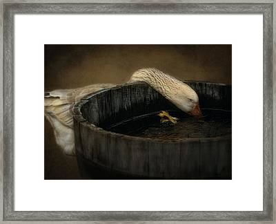 Golden Goose Framed Print by Robin-Lee Vieira