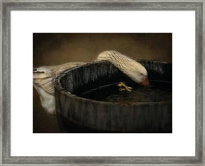 Golden Goose Framed Print by Robin-lee Vieira