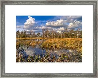 Golden Grasses Framed Print by Debra and Dave Vanderlaan