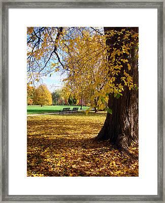 Golden Guardian Framed Print