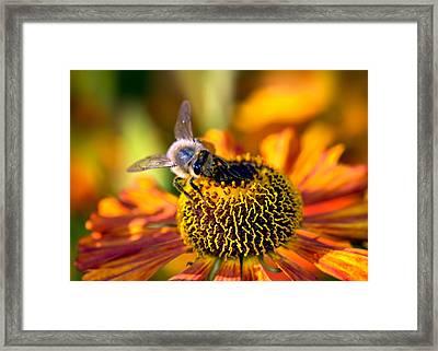 Golden Harvest Framed Print