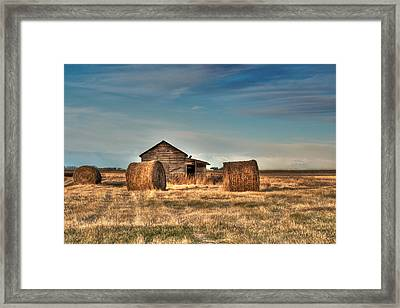 Golden Hay Framed Print