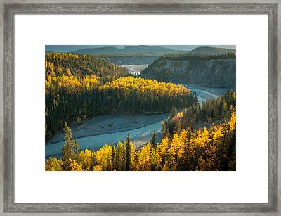 Golden Highlights Framed Print