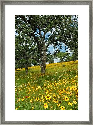 Golden Hillside Framed Print