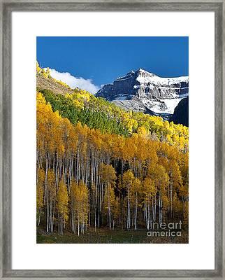 Golden Hillside Framed Print