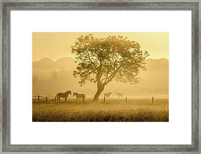 Golden Horses Framed Print