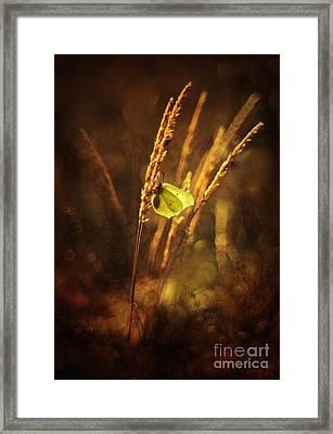 Golden Hour Framed Print by Jaroslaw Blaminsky