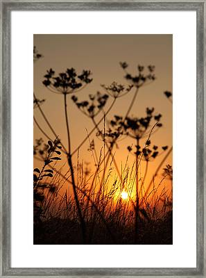 Golden Hour Framed Print by Paul Lilley