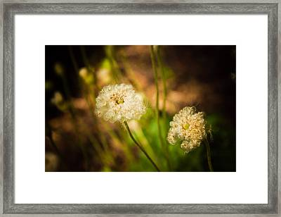 Golden Hour Framed Print by Sara Frank