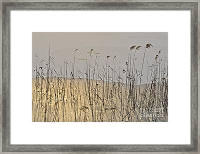 Golden Ice Framed Print
