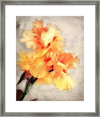 Golden Iris 1 Framed Print