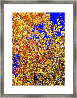 Golden Framed Print by Kathleen Struckle