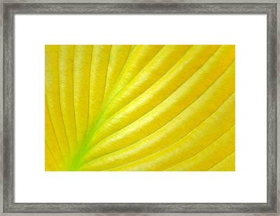 Golden Framed Print by Kelly Nowak