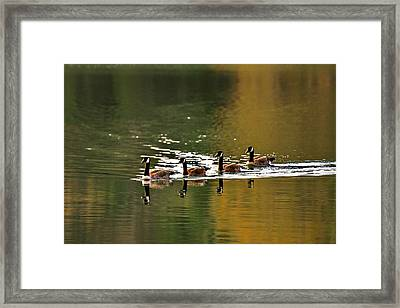 Golden Lake Framed Print by Menachem Ganon