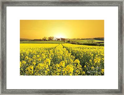 Golden Landscape Framed Print by Boon Mee