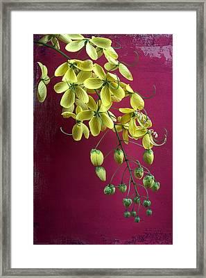 Golden Lantern Framed Print by Chrystyne Novack