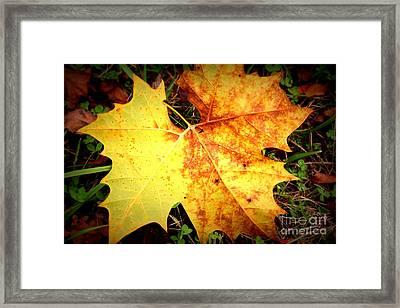 Golden Leaf Framed Print