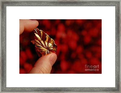 Golden Leaves Framed Print by Amy Cicconi