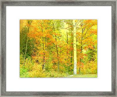 Golden Leaves  Framed Print by Dianne  Lacourciere