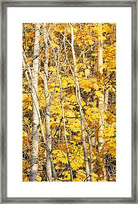 Golden Leaves In Autumn Abstract 2 Framed Print