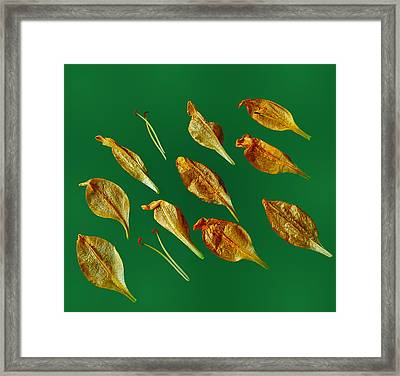 Framed Print featuring the photograph Golden Leaves by Marwan Khoury