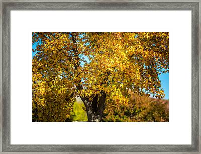 Golden Leaves Of Autumn Framed Print by Mike Lee