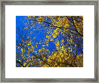 Golden Leaves Framed Print by Penny Lisowski