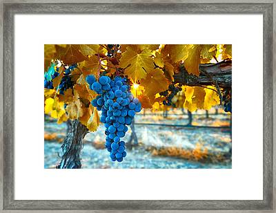 Golden Leaves With Grapes Framed Print by Lynn Hopwood
