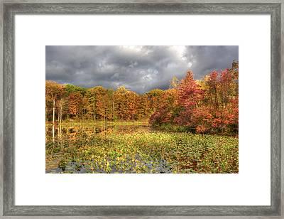 Golden Light And Autumn Leaves Framed Print