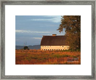 Golden Light At Nisqually Wildlife Refuge Framed Print