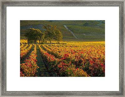 Golden Light In The Valley Framed Print by Bill Gallagher