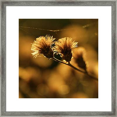 Golden Light Framed Print by Jane Eleanor Nicholas