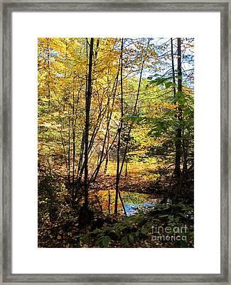 Golden Light Framed Print by Linda Marcille