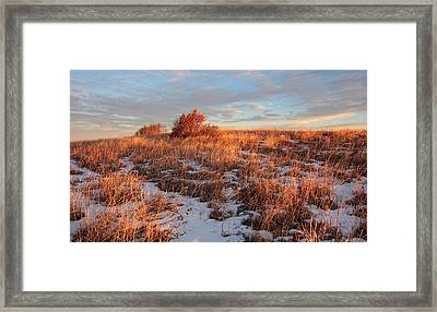 Golden Light On The Copper Beeches Framed Print by Keith Clontz
