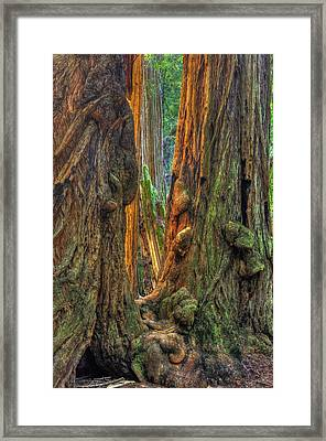 Golden Light Reaches The Grove Floor Muir Woods National Monument Late Winter Early Afternoon Framed Print by Michael Mazaika