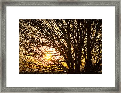 Golden Light Shining Through Framed Print by James BO  Insogna