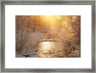 Golden Light Framed Print by Sylvia  Niklasson