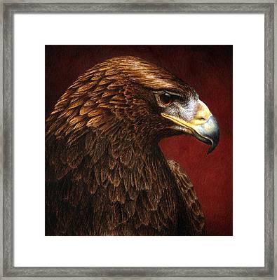 Golden Look Golden Eagle Framed Print by Pat Erickson