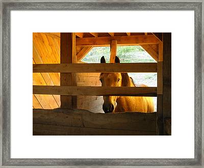 Golden Maia Framed Print