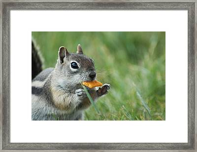 Framed Print featuring the photograph Golden-mantled Ground Squirrel by Susan D Moody