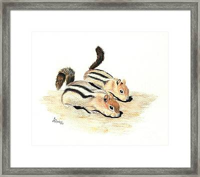 Golden-mantled Ground Squirrels Framed Print by Lynn Quinn
