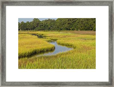 Golden Marsh Framed Print