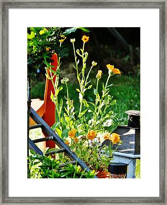 Framed Print featuring the photograph Golden Moment by VLee Watson