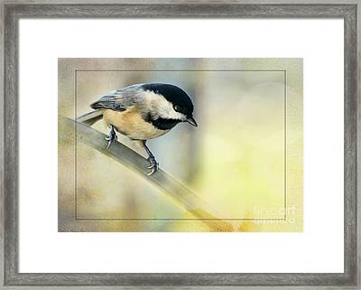 Golden Morning Chickadee Framed Print by Debbie Portwood