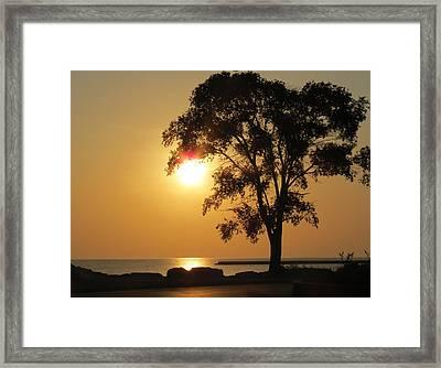Golden Morning Framed Print by Kay Novy