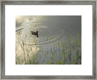 Golden Morning Framed Print by Sheila Silverstein