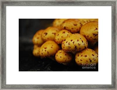 Golden Mushrooms Framed Print by Susan Hernandez