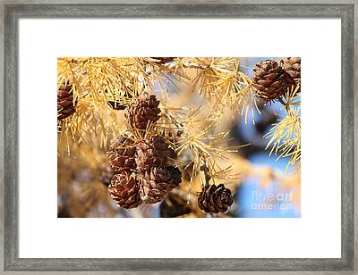 Framed Print featuring the photograph Golden Needles by Ann E Robson