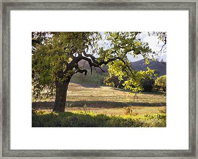 Golden Oaks Framed Print by Sharon Foster